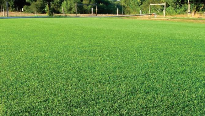 A sports field showing turf grass in use.