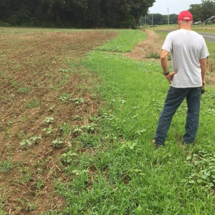 Crabgrass failure